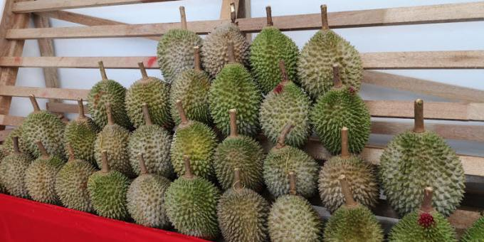 msw durian